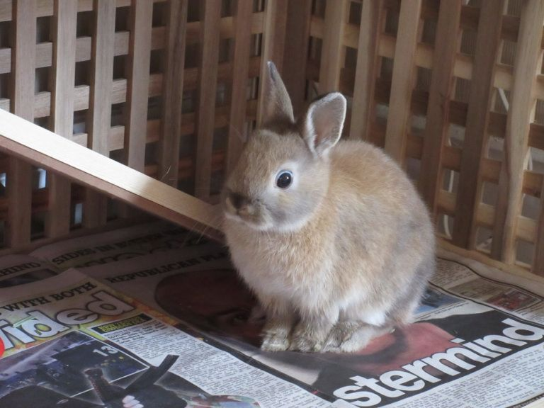 How to make a bunny palace ikea hack rabbit cage