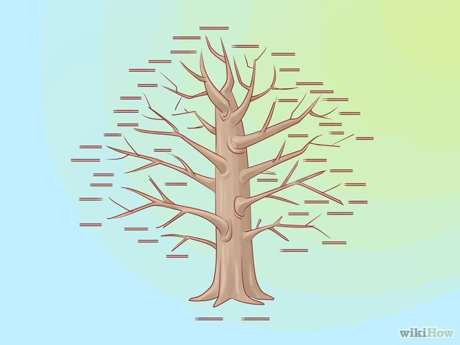 comment faire un arbre g n alogique genealogie pinterest arbres g n alogiques comment. Black Bedroom Furniture Sets. Home Design Ideas