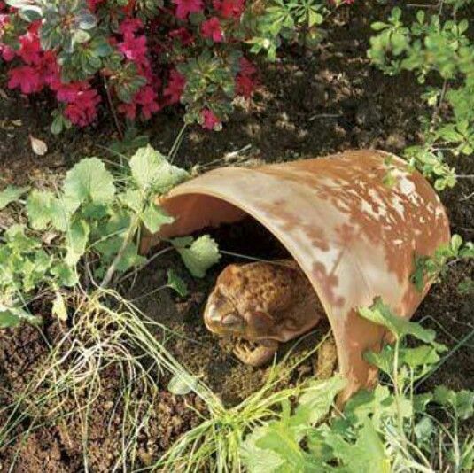 toad houses for gardens | Frogs