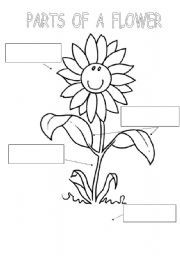 English worksheet: PARTS OF A FLOWER | All for the kids ...