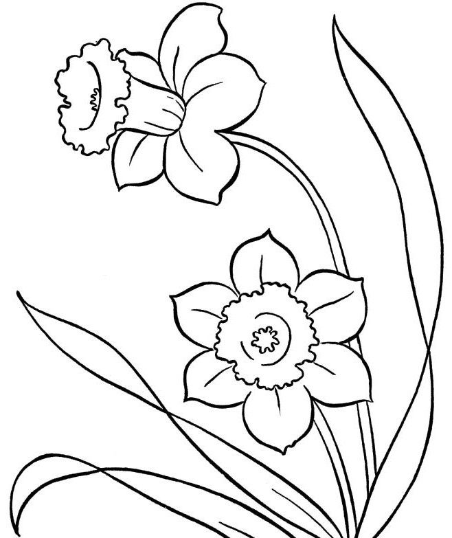 Spring Flowers Colouring Pages Photo Crafts Pinterest Spring
