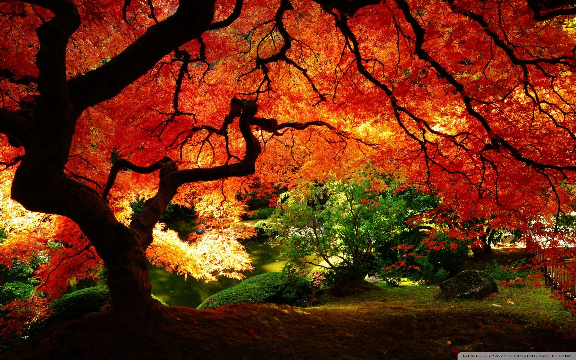 Beautiful Autumn Hd Desktop Wallpaper Mobile Dual Monitor Autumn Scenery Landscape Wallpaper Fall Wallpaper