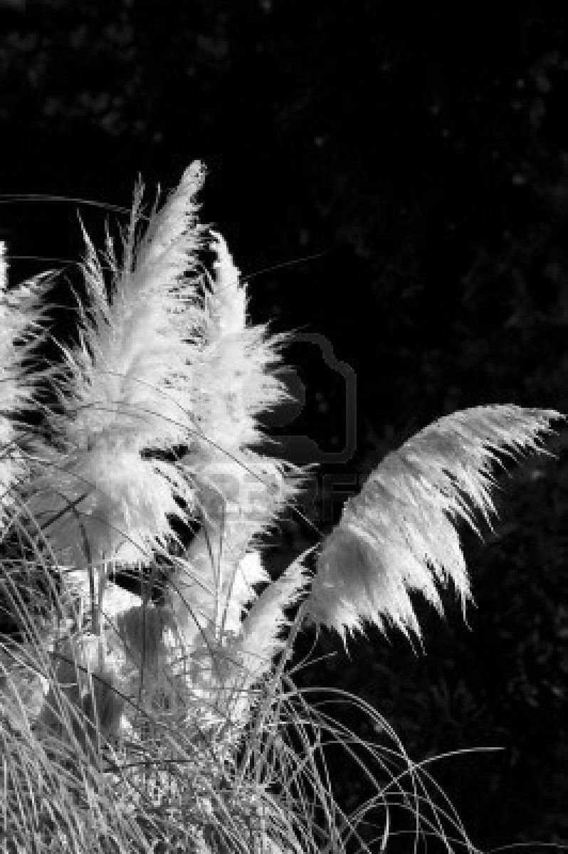 Black White View Of Wild Flowers In The Grass Stock Photo Art