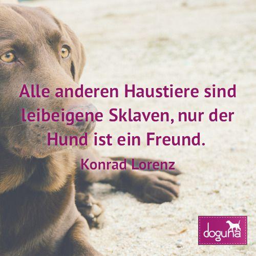 Alle Anderen Haustiere Sind Leibeigene Sklaven Nur Der Hund Ist Ein Freund Konrad Lorenz Hund Hunde Dog Dogs Dogsofinstagram Love Beautif Dogs Animals