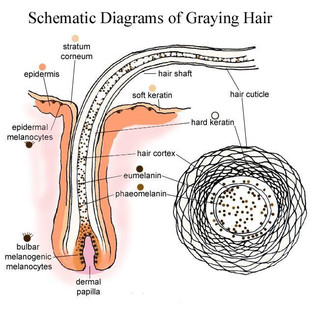How to prevent grey hair from growing naturally remedies to preventing grey hair growth in men - Ways prevent grey hair ...