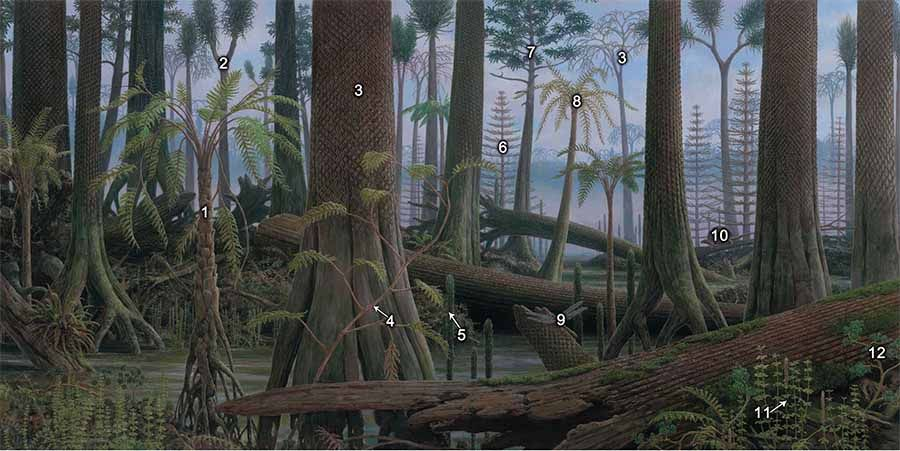 Mural 5 Carboniferous Coal Swamp Forests Prehistory Pinterest