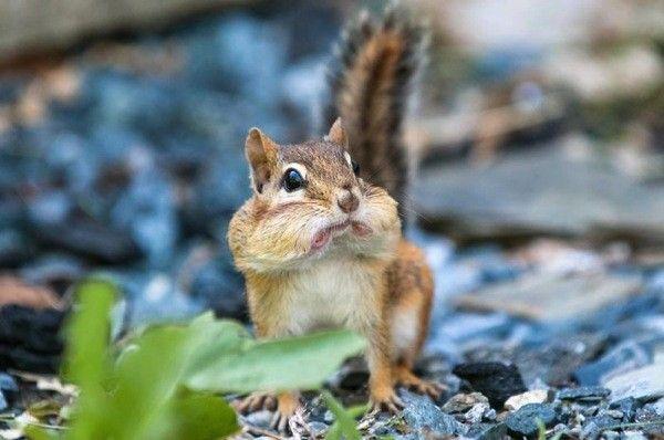 hämmästynyt-orava