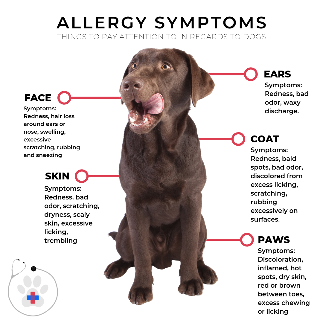 The Ohio Valley Is Known For Being A Hot Bed Of Allergens Making It One Of The Worst Allergy Prone Areas In The U Pet Emergency Animal Hospital Skin Allergies