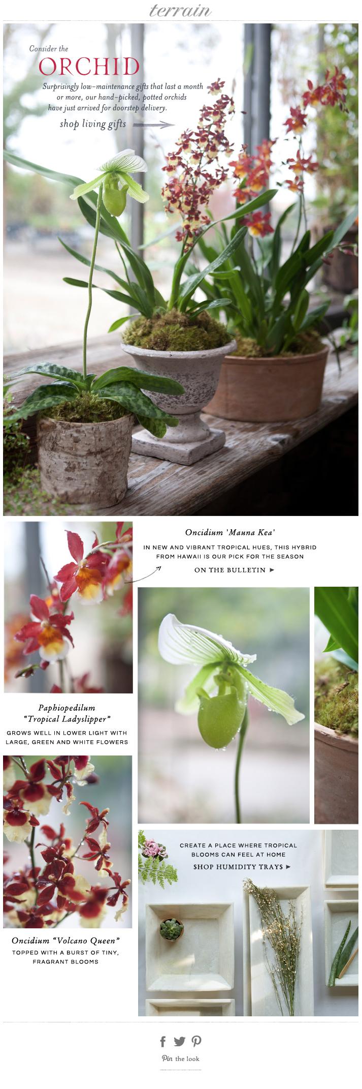 Terrain Grid Orchid centerpieces