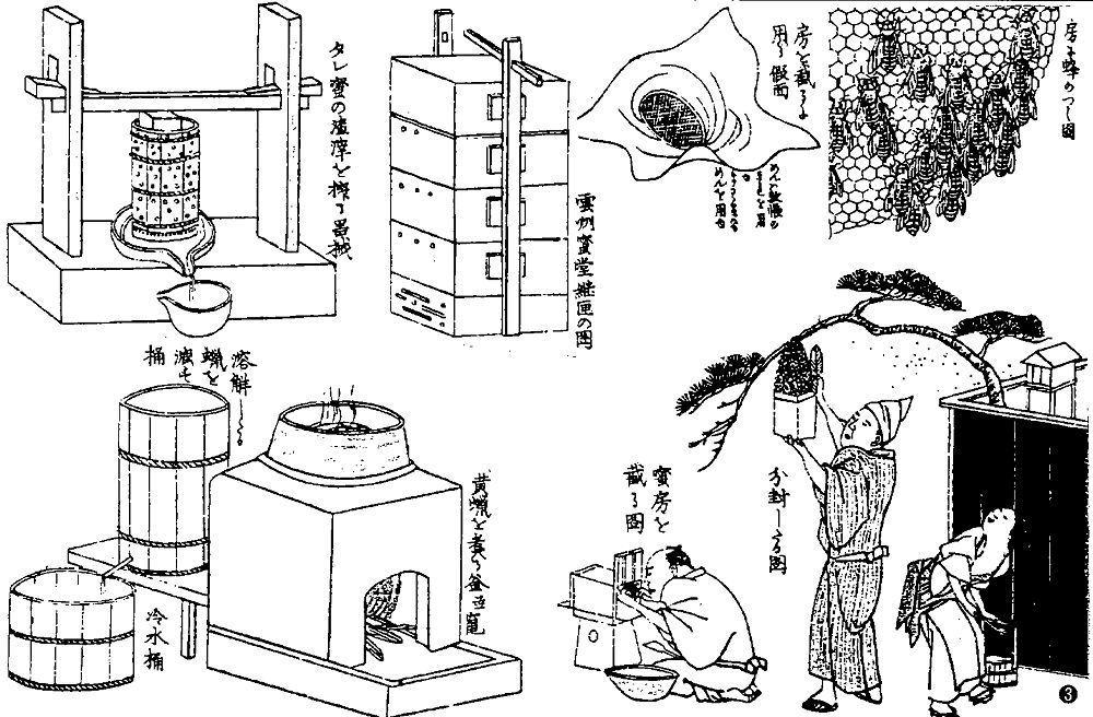 ニホンミツバチによる旧式養蜂の歴史 ニホンミツバチ 電子図書館 養蜂