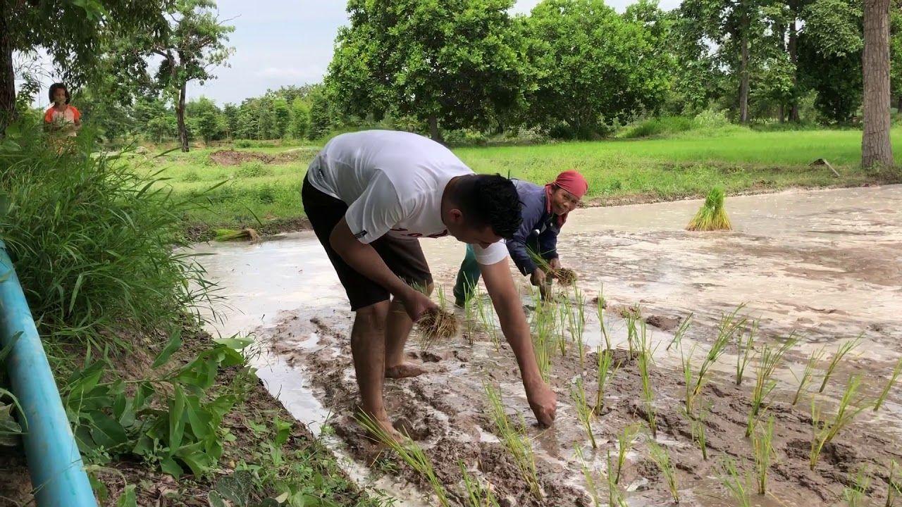 صرنا مزارعين و زرعنا ارز للمرة الاولى Scenes Couple Photos Photo