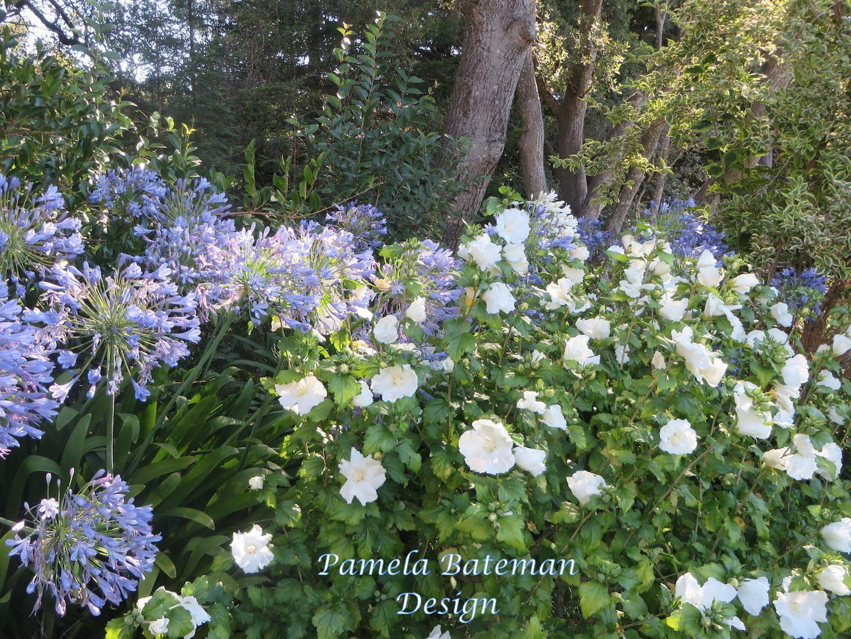 Blue And White Garden With Hibiscus Diana A Portfolio Pamela