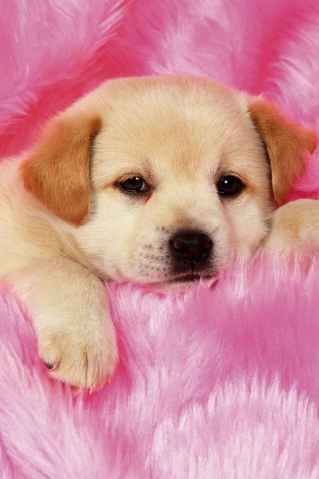 Pin By Carly On Valentines Day Really Cute Puppies Cute