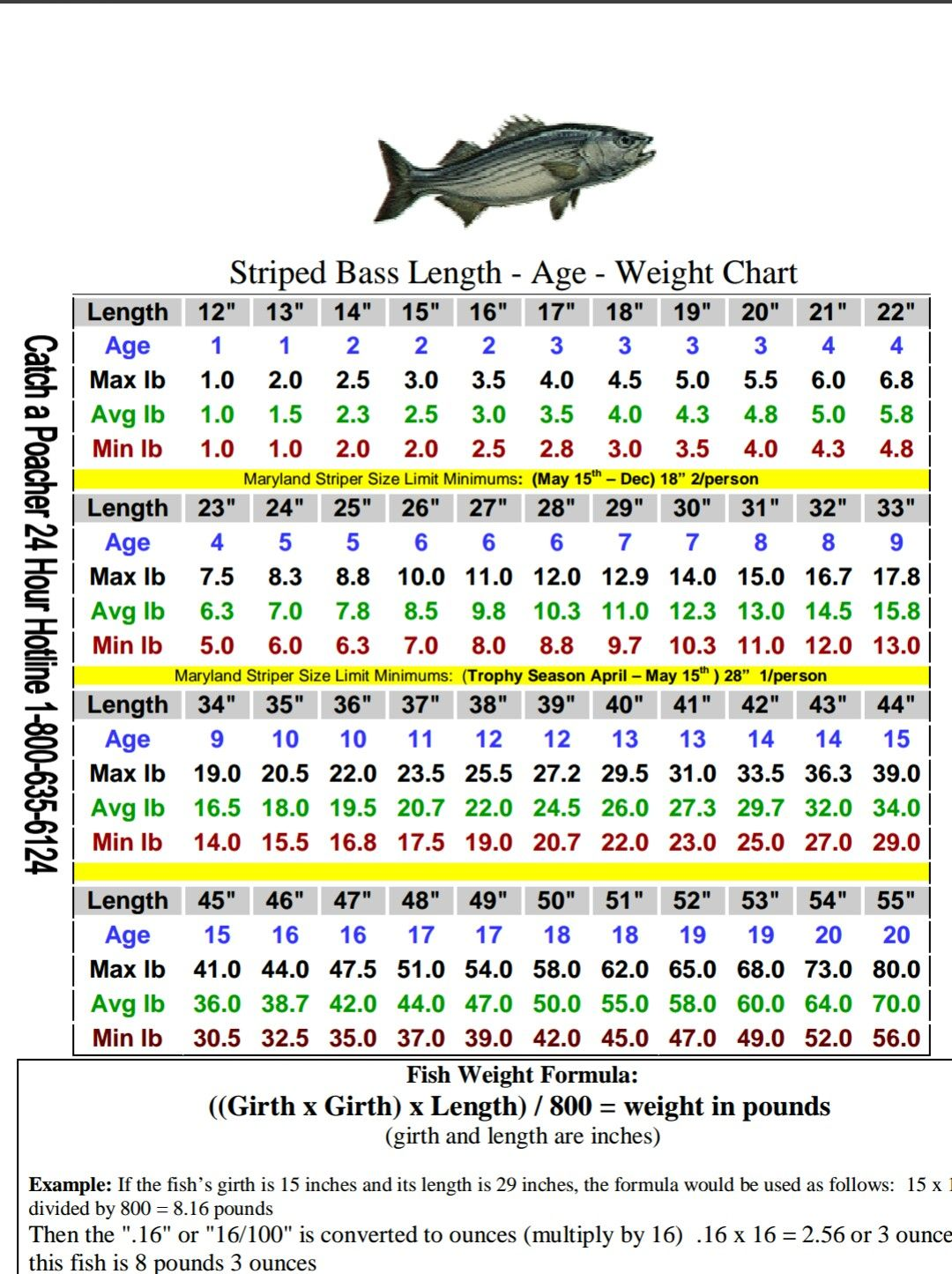 striped bass size chart fishing pinterest