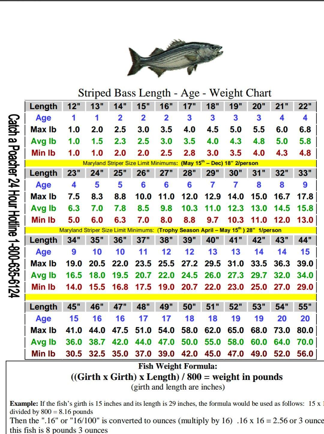 Striped Bass Size Chart Fishing Size Chart Chart Bass