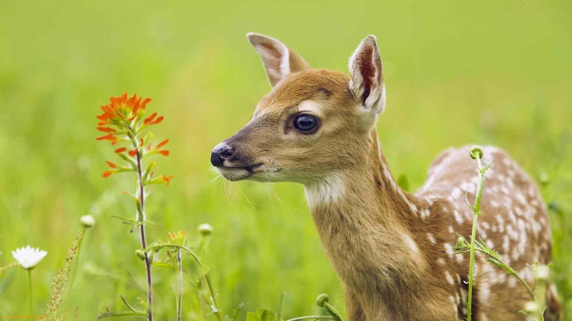 The Private Life Of Deer Amazing Nature Documentary Hd Whitetailed Deer Seem To Be Always Around Us Whethe Animals Beautiful Nature Animals Animals Images