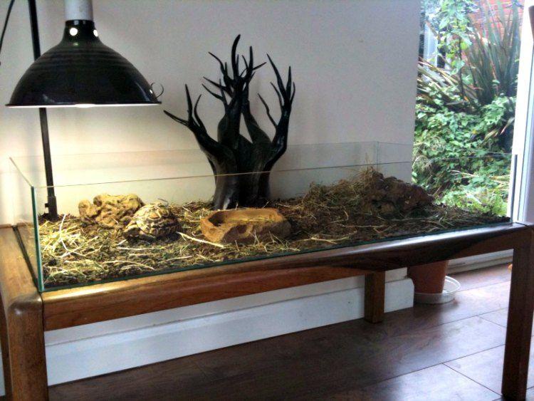 Фото домашних террариумов для сухопутных черепах