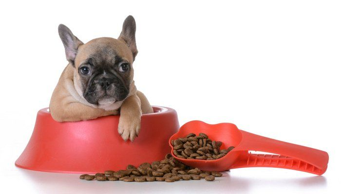 Best Dog Food For French Bulldogs 7 Vet Recommended Brands Best