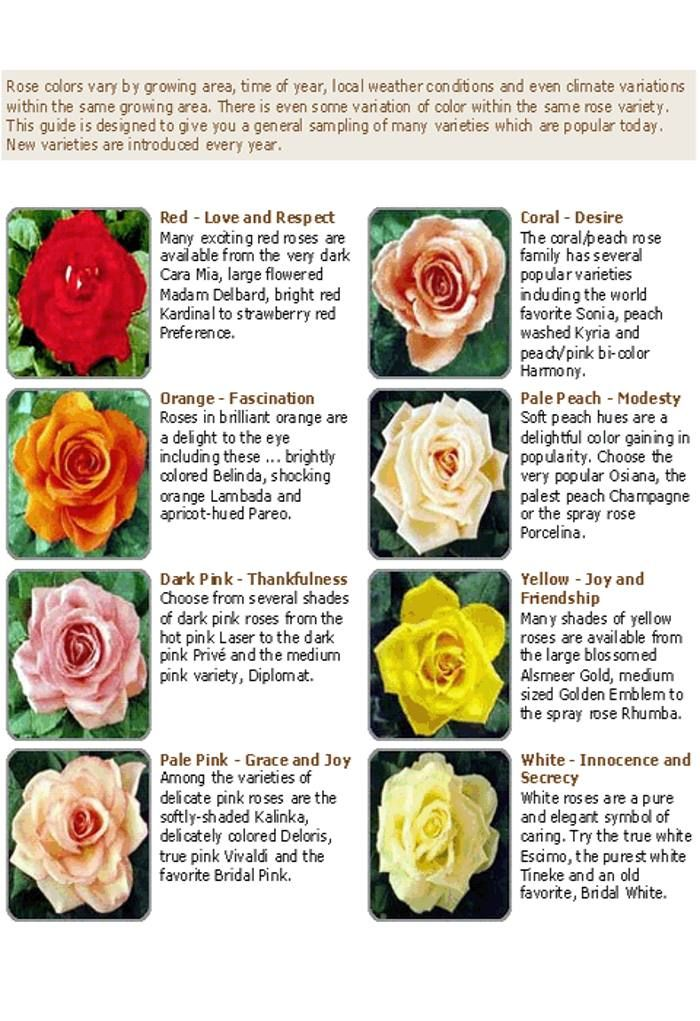 Picture Of Flowers With Name And Meanings Free Reference Images Flower Meanings Flower Pictures Rose Varieties