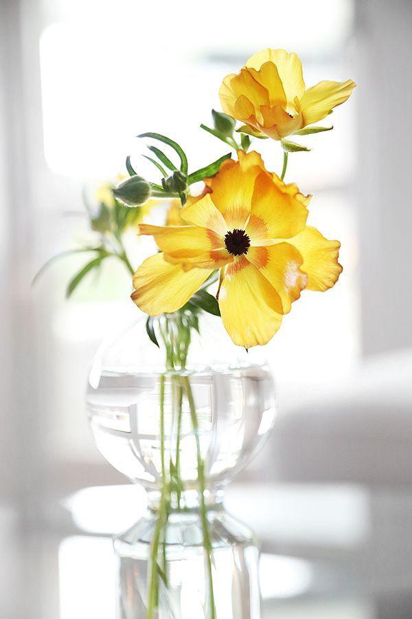 Trendigaste Snittblomman Japansk Ranunkel Trendenser Blomster Japansk