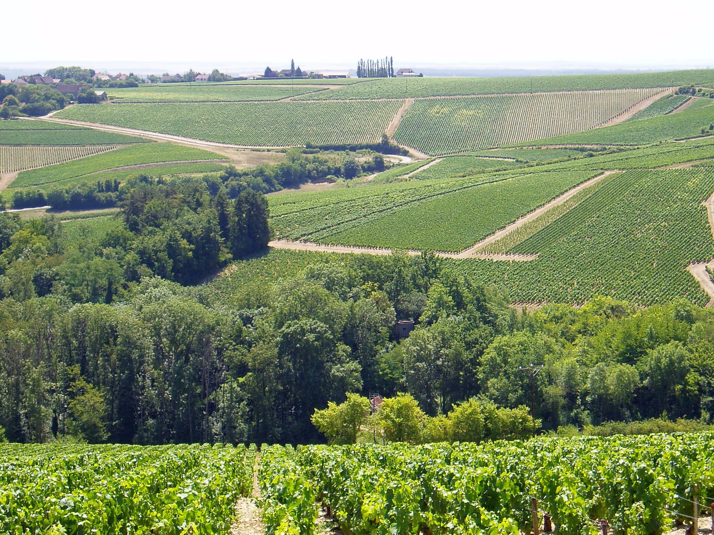 Burgundy boasts some of the world's finest wines with around 60,000 acres of sunlit vines and arguably the prettiest canals in France.