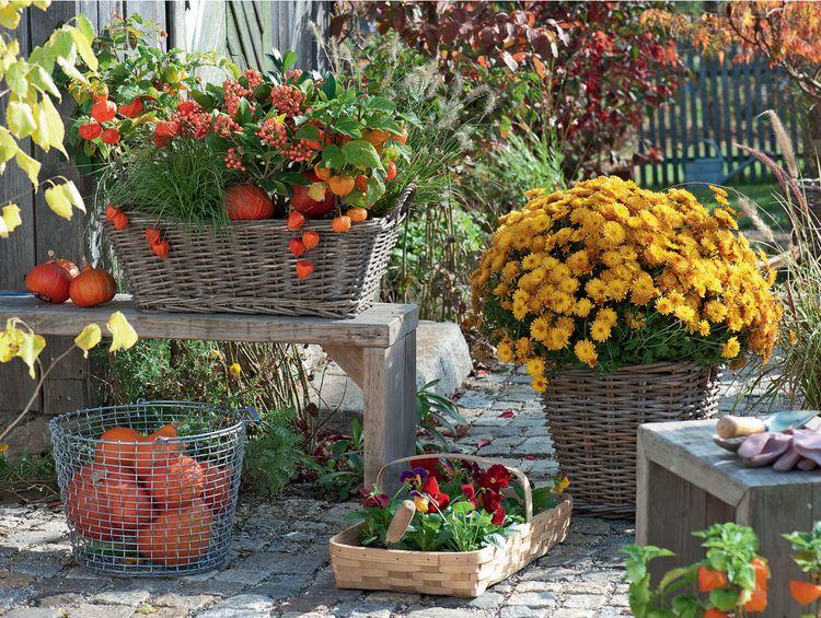 Herbstliche Deko Fur Den Garten Herbstpflanzen Und Kurbisse In 2020 Bepflanzung Herbstgarten Garten