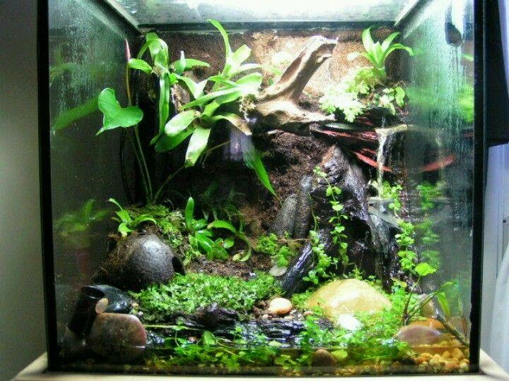 Vivarium water feature gecko terrarium inspiration for Fish tank frogs