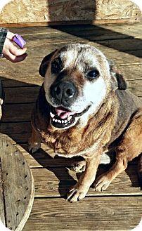 dog breeders in columbus ohio