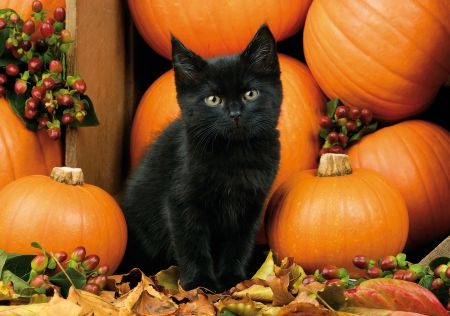 Autumn Kitten Berries Autumn Fall Halloween Leaves Black Cat Kitten Cat Pumpkins Black Cat Halloween Fall Cats Black Kitten
