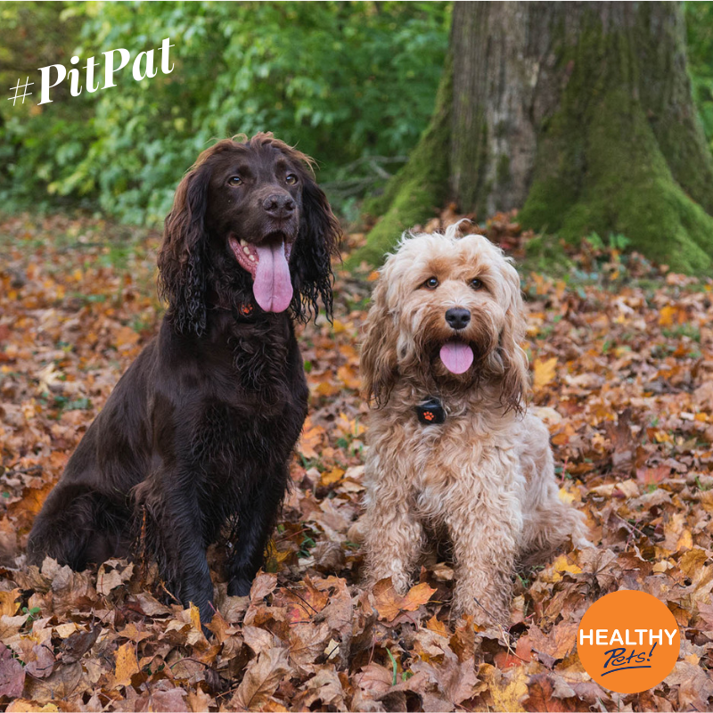 Have you been enjoying the autumn weather with your dog
