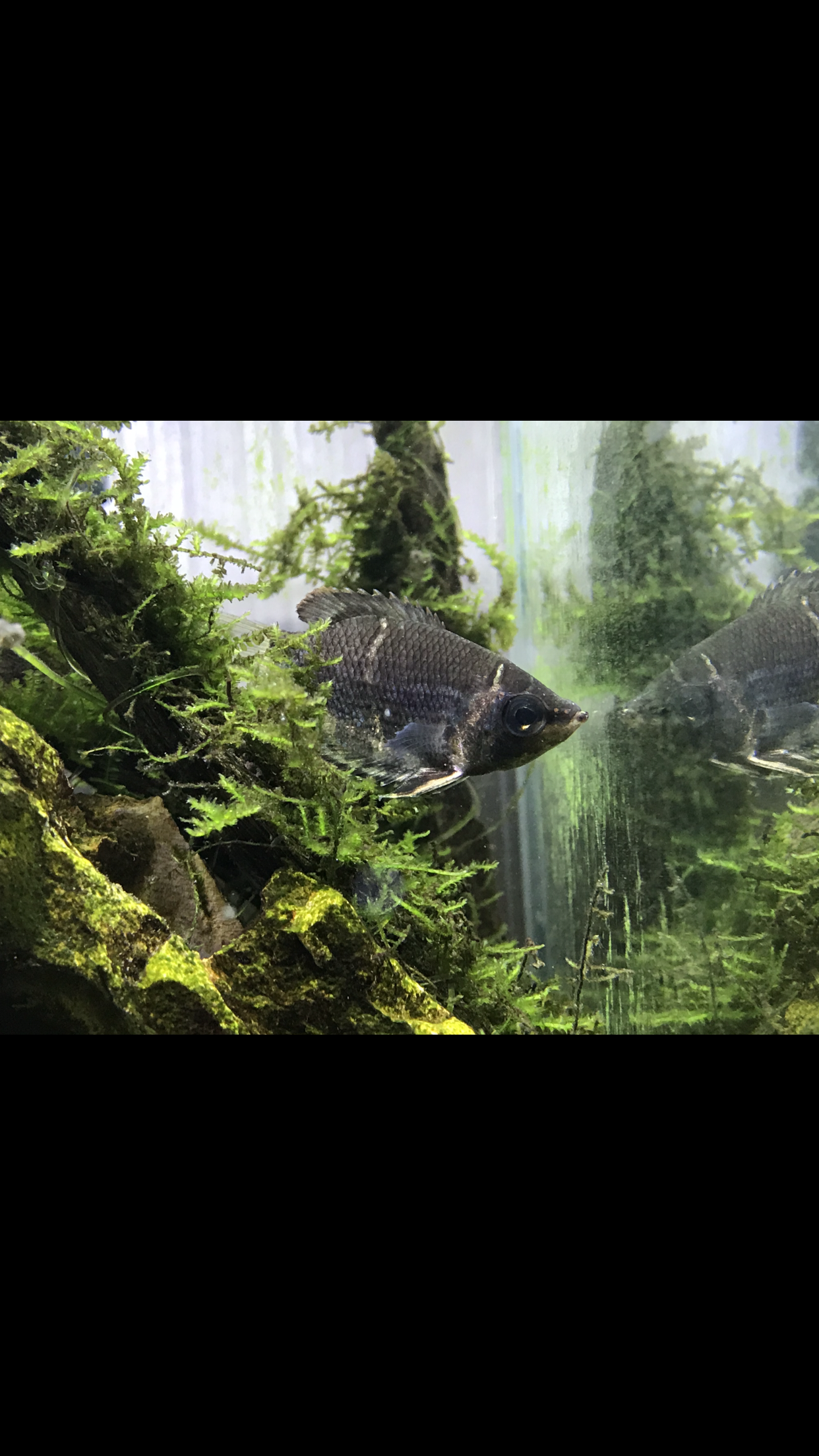 Idea by William Au on Aquascaping (scapewillyscape ...