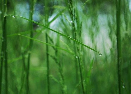 3d Dew Grass Hd Wallpapers Wallpapers For Desktop Android