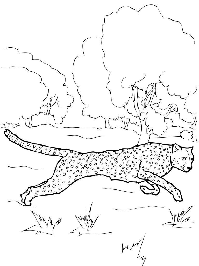 Free Printable Cheetah Coloring Pages For Kids Animal Coloring Pages Zoo Animal Coloring Pages Coloring Pages