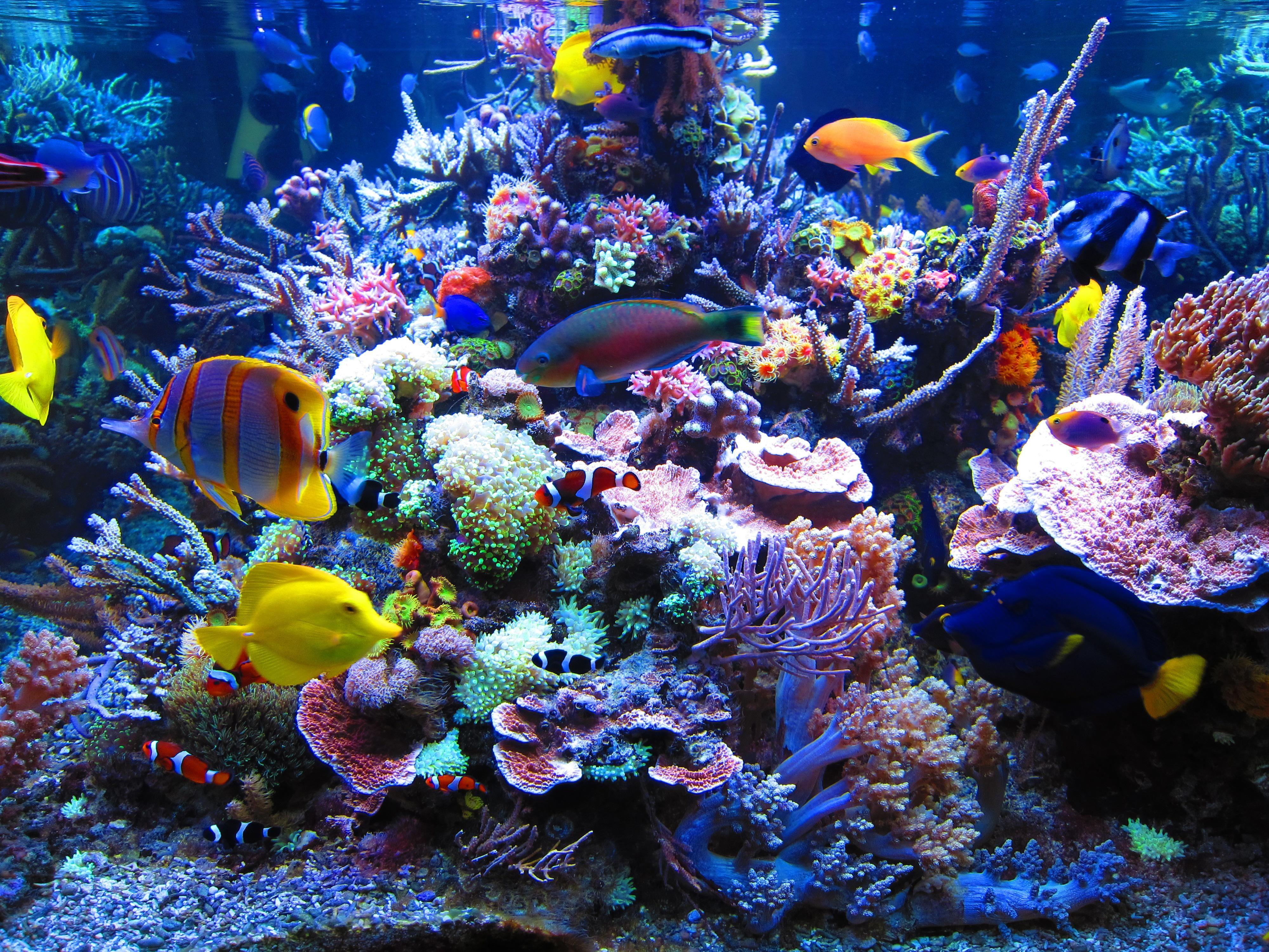 Fish for marine aquarium - Dormero Hotel Rotes Ross Reef Aquarium Reefland Com