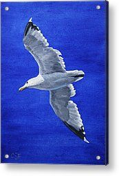 Seagull Painting Acrylic Prints - Seagull in Flight Acrylic Print by Crista Forest