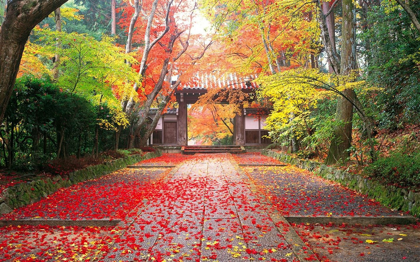 Autumn In Japan Golden Landscape Wallpaper