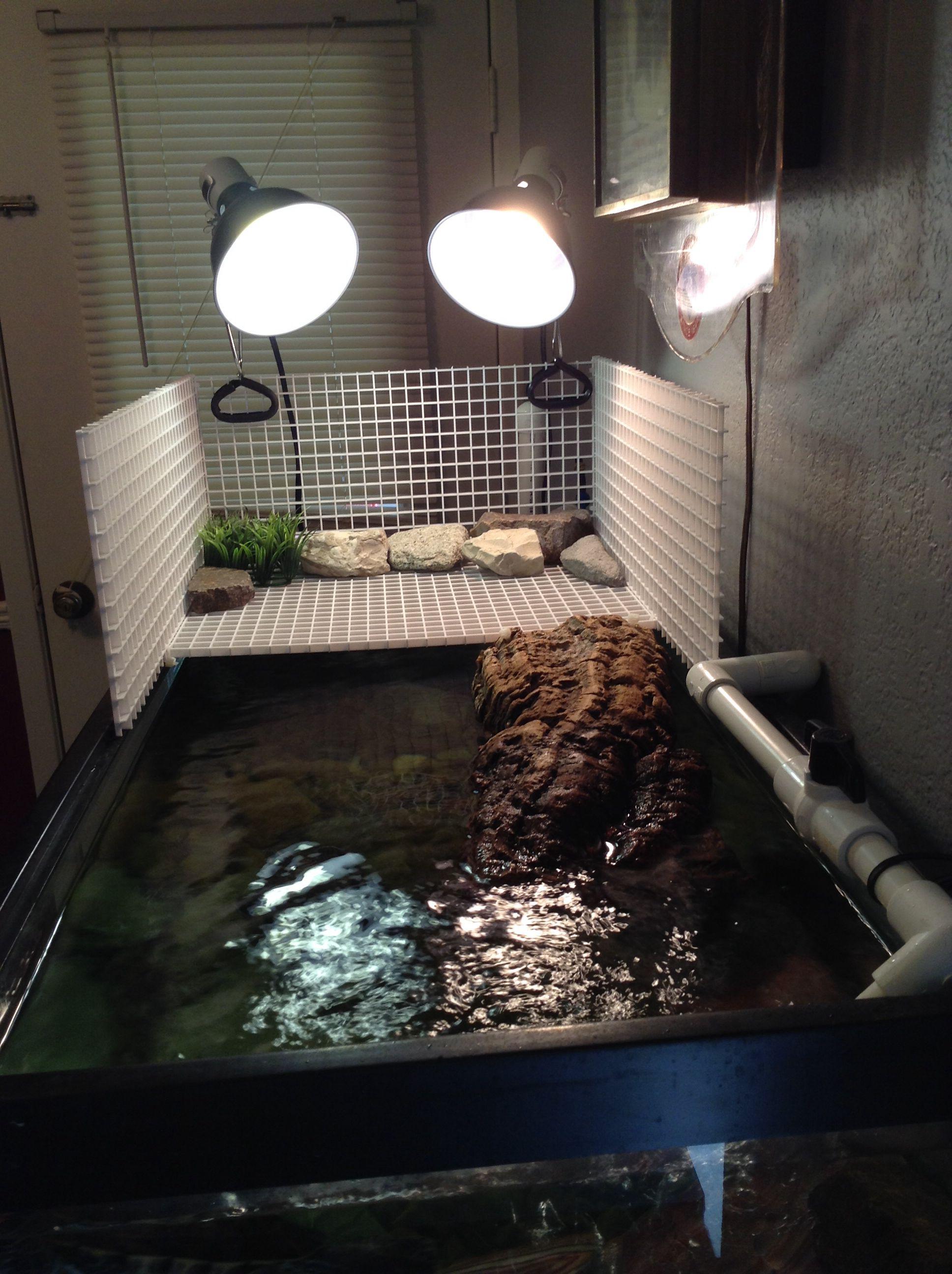 Turtle Basking Area I Like The Basking Area But I Would
