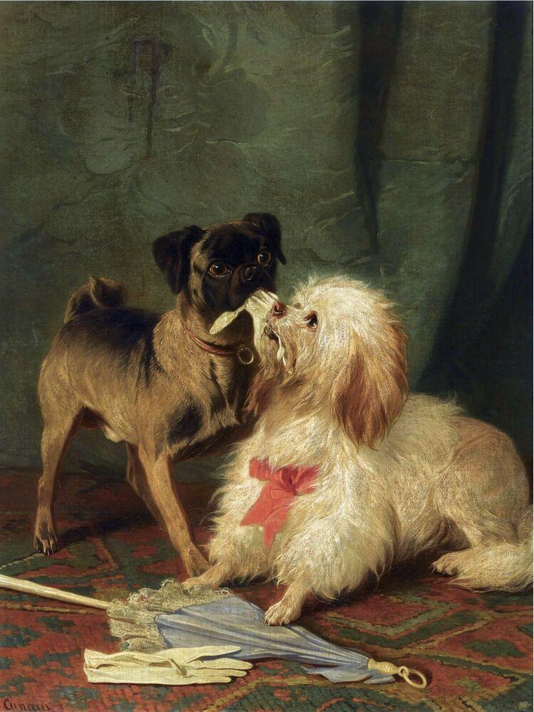 MALTESE CONRADYN CUNAEUS PUG 1800/'s Tug of War Dogs Antique Art Prints