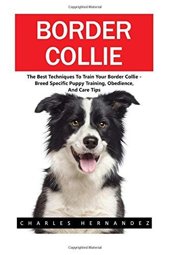 Border Collie The Best Techniques To Train Your Border Collie