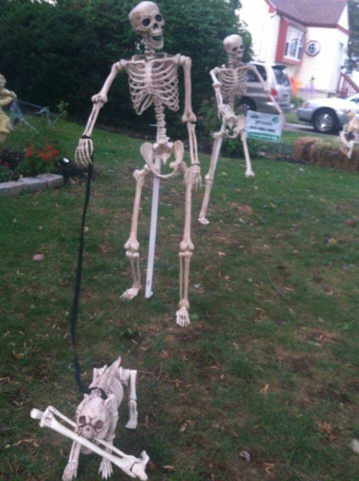 Pin On Skeleton Fun