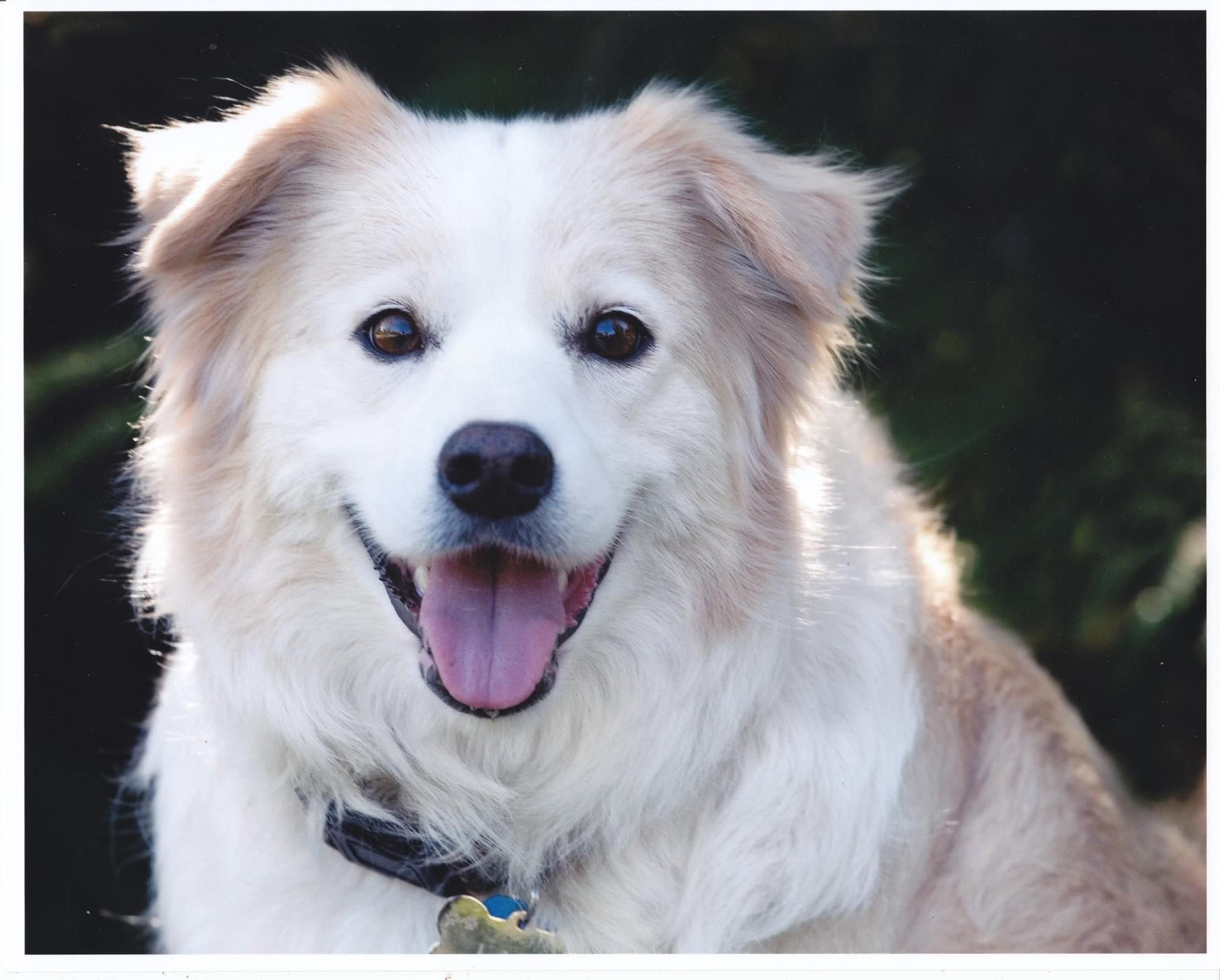 Lady x (With images)   Dogs, Border collie, Animals