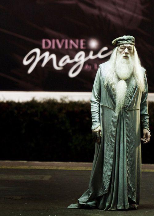 Albus Dumbledore Albus Dumbledore Harry Potter Dumbledore Harry Potter Love