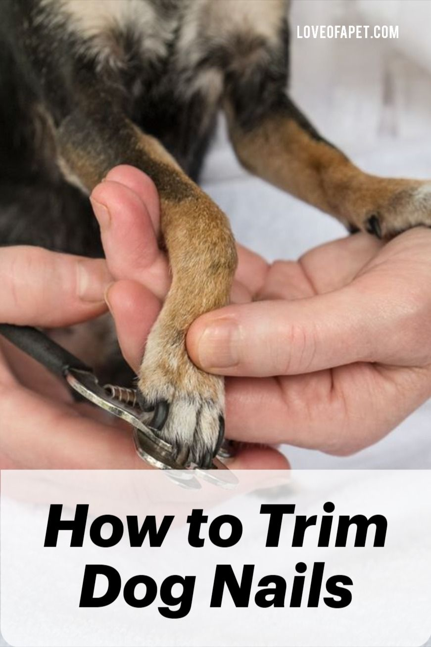 How to trim dog nails that are overgrown love of a pet