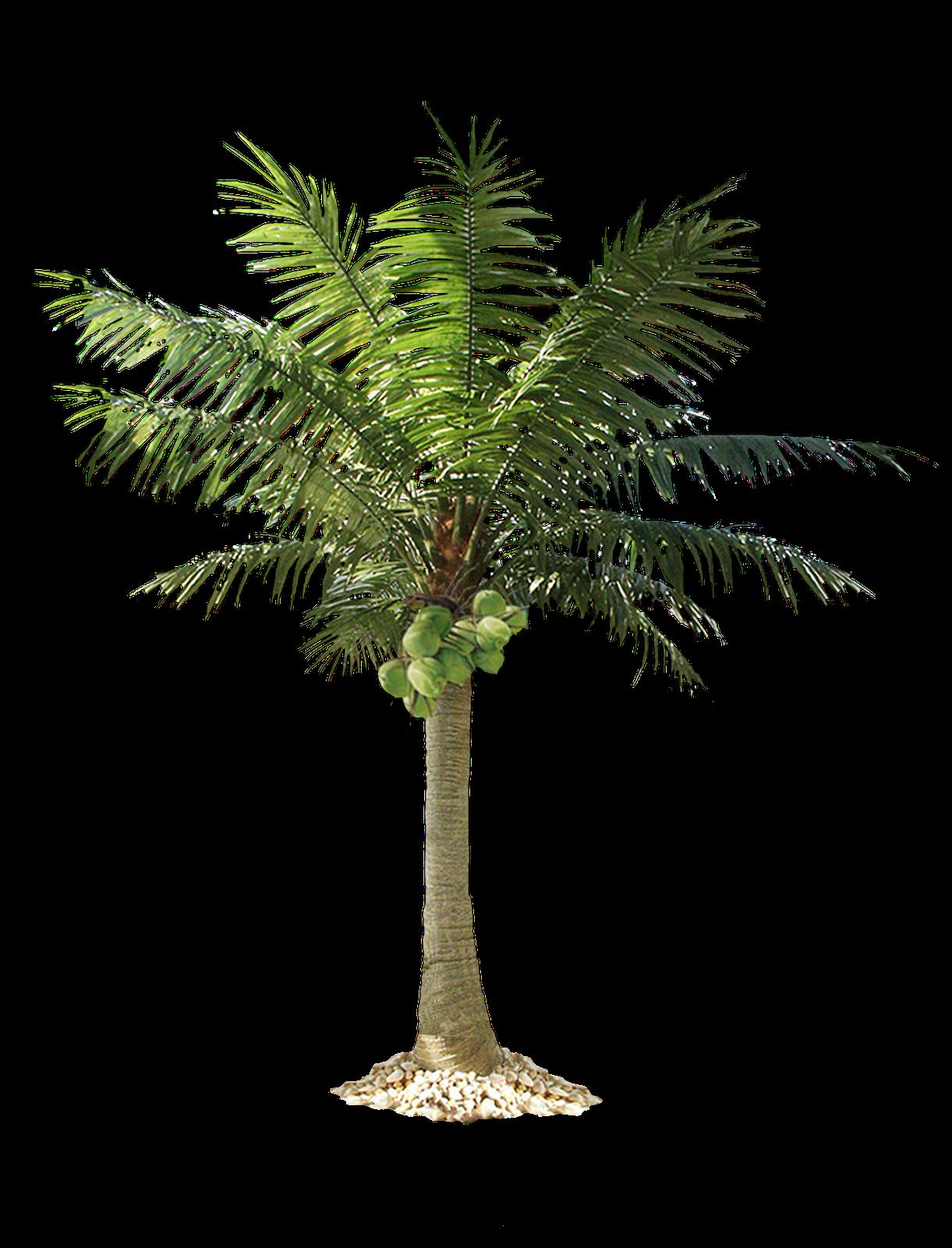 Palm Tree Png Palm Tree Png Fake Palm Tree Tree Photoshop
