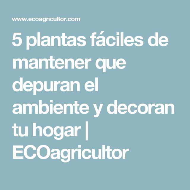 5 plantas fáciles de mantener que depuran el ambiente y decoran tu hogar | ECOagricultor