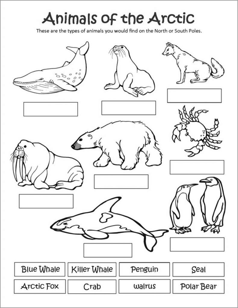 Printable Arctic Animal Coloring Pages In 2020 Arctic Animals Printables Arctic Animals Preschool Polar Animals