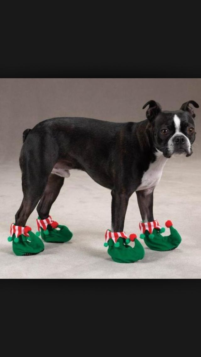 Cute Dog Shoes Dogs Dog Boots Christmas Dog