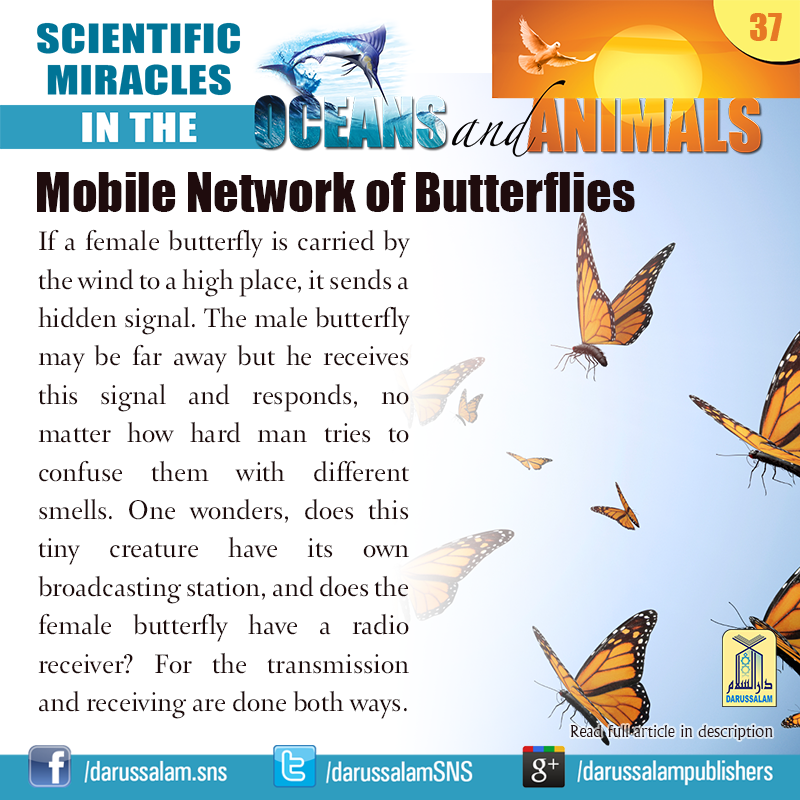 Science Hidden Facts: Mobile Network Of Butterflies If A Female Butterfly Is
