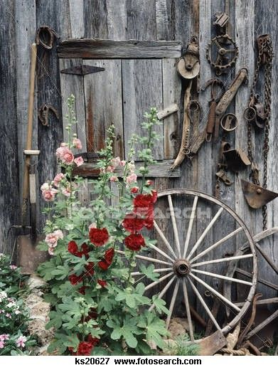 1980s Pink Red Hollyhocks Flowers By Side Old Weathered