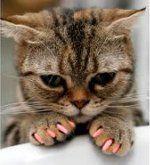 Soft Paws Are a Godsend!